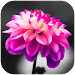Download COLOR - Color Splash Effect Photo Editor 1.1.1 APK