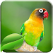 Download Lovebird Therapy Master 2.0 APK