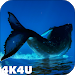 4K Whales Video Live Wallpaper